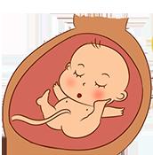 02-02-foetus-175px
